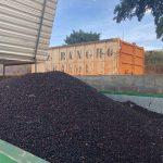 brazil rancho grande 1