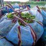 rwanda kivu green tea 1